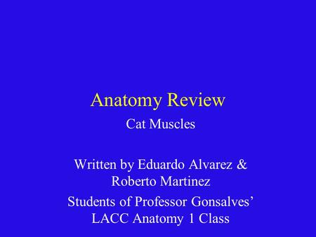 Anatomy Review Cat Muscles
