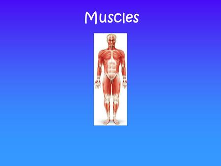 Muscles. What you Need to Know Look briefly at the Structure of: 1) Skeletal, 2) Smooth & 3) Cardiac Muscle Naming, Identification, Functions You are.