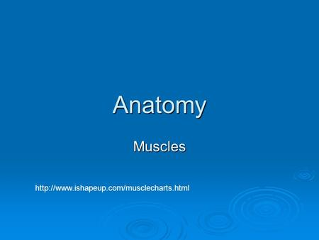 Anatomy Muscles http://www.ishapeup.com/musclecharts.html.