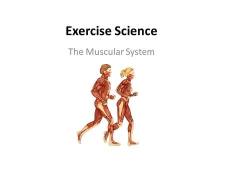 Exercise Science The Muscular System.