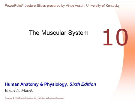 The Muscular System 10.