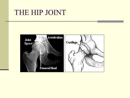 THE HIP JOINT.