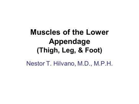 Muscles of the Lower Appendage (Thigh, Leg, & Foot) Nestor T. Hilvano, M.D., M.P.H.