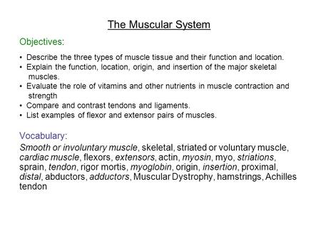 the muscular system and its functions The muscular system muscle does alot more than just shorten to create movmement read this page for an overview of the numerous functions of this amazing tissue.