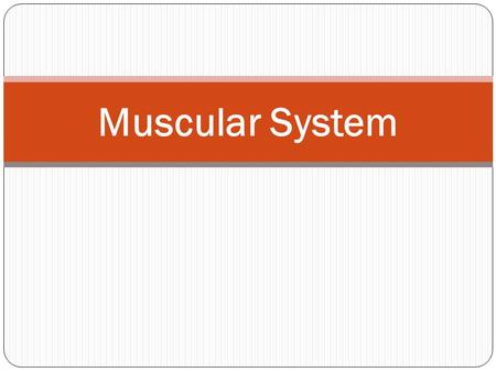 Muscular System. Introduction Over 600 muscles make up the muscular system MUSCLES ARE = Bundles of muscle fibers that are held together by connective.