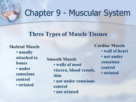 Three Types of Muscle Tissues Skeletal Muscle usually attached to bones under conscious control striated Smooth Muscle walls of most viscera, blood vessels,