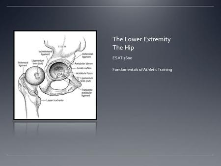 The Lower Extremity The Hip