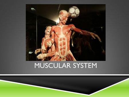 MUSCULAR SYSTEM.  All movements require muscles, which are organs that use chemical energy to contract  Because they contract, they:  Cause Movement.