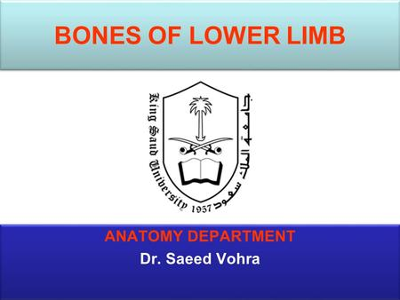 BONES OF LOWER LIMB ANATOMY DEPARTMENT Dr. Saeed Vohra.