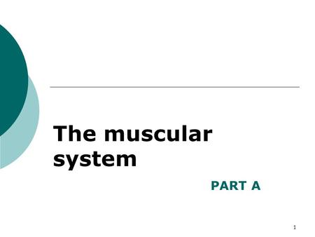 The muscular system PART A.