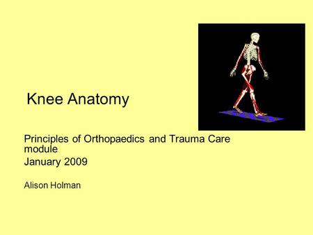 Knee Anatomy Principles of Orthopaedics and Trauma Care module January 2009 Alison Holman.