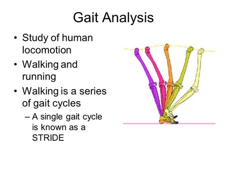 Gait Analysis Study of human locomotion Walking and running Walking is a series of gait cycles –A single gait cycle is known as a STRIDE.