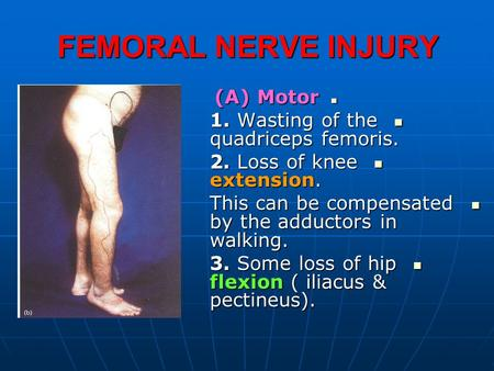 lumbosacral plexus sciatic and femoral nerves - ppt download, Muscles