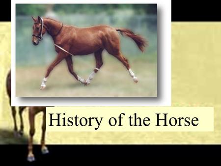 History of the Horse. Evolution of the Horse  Eohippus  Earliest ancestor to our present horse  Small primitive horse about the size of a fox  Elongated.