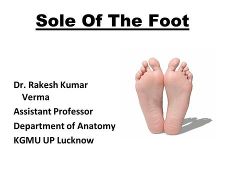 Sole Of The Foot Dr. Rakesh Kumar Verma Assistant Professor Department of Anatomy KGMU UP Lucknow.
