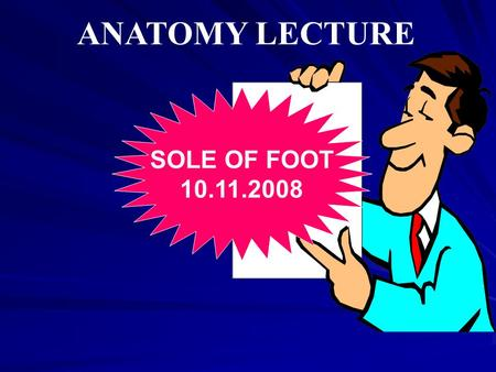 ANATOMY LECTURE SOLE OF FOOT 10.11.2008. Dermatomes of the foot.