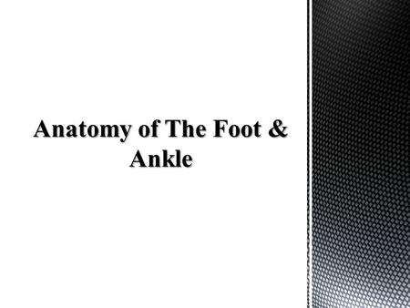 The foot is broken down into three major regions: -Forefoot: 5 Metatarsals, 14 Phalanges, 2 sesamoids -Mid-foot: Navicular, Cuboid, Cuneiforms -Hind-foot: