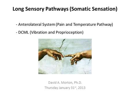 Long Sensory Pathways (Somatic Sensation) David A. Morton, Ph.D. Thursday January 31 st, 2013 - Anterolateral System (Pain and Temperature Pathway) - DCML.