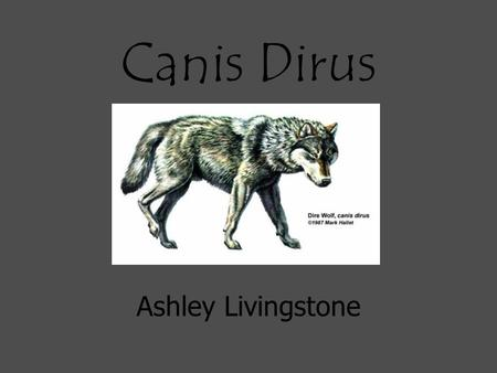 Canis Dirus Ashley Livingstone. They lived during the Ice Age and Pleistocene appeared in Eurasia.