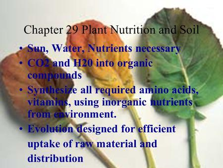 Chapter 29 Plant Nutrition and Soil Sun, Water, Nutrients necessary CO2 and H20 into organic compounds Synthesize all required amino acids, vitamins, using.