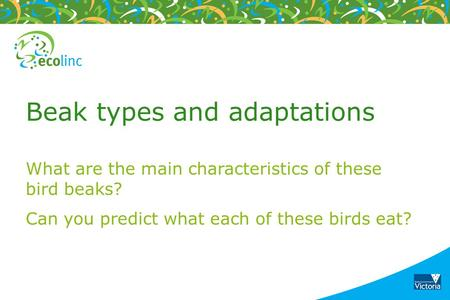 Beak types and adaptations