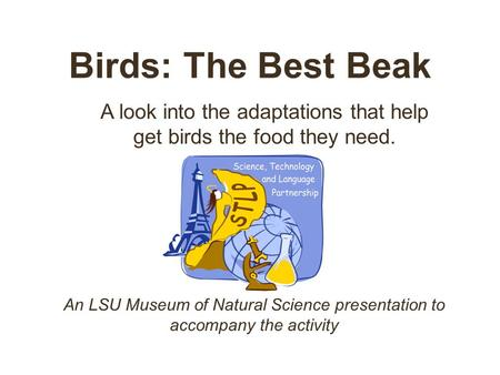 Birds: The Best Beak A look into the adaptations that help get birds the food they need. An LSU Museum of Natural Science presentation to accompany the.