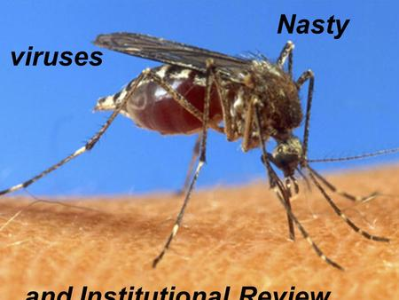 Nasty viruses and Institutional Review Boards. WHO: 50 million cases/yr.