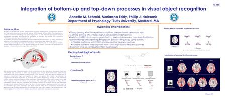Integration of bottom-up and top-down processes in visual object recognition Annette M. Schmid, Marianna Eddy, Phillip J. Holcomb Department of Psychology,