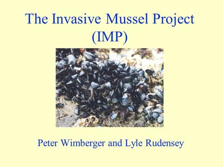 The Invasive Mussel Project (IMP) Peter Wimberger and Lyle Rudensey.