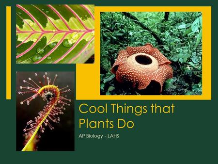 Cool Things that Plants Do AP Biology - LAHS. Cool Things that Plants Do  1. Organ Modification  2. Movement  3. Clonal Colony  4. Grafting  5. Really.