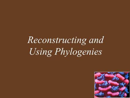 Reconstructing and Using Phylogenies. Key Concepts Phylogeny Is the Basis of Biological Classification All of Life Is Connected through Its Evolutionary.