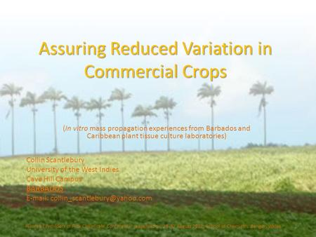 Assuring Reduced Variation in Commercial Crops (In vitro mass propagation experiences from Barbados and Caribbean plant tissue culture laboratories) Plants.