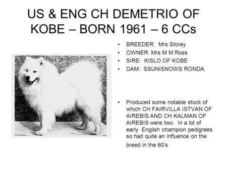 US & ENG CH DEMETRIO OF KOBE – BORN 1961 – 6 CCs BREEDER: Mrs Storey OWNER: Mrs M M Ross SIRE: KISLO OF KOBE DAM: SSUNISNOWS RONDA Produced some notable.
