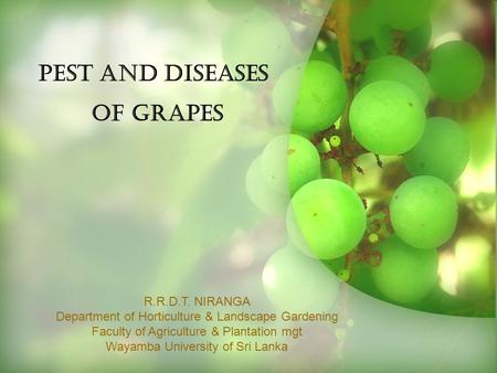 PEST AND DISEASES OF GRAPES R.R.D.T. NIRANGA Department of Horticulture & Landscape Gardening Faculty of Agriculture & Plantation mgt Wayamba University.