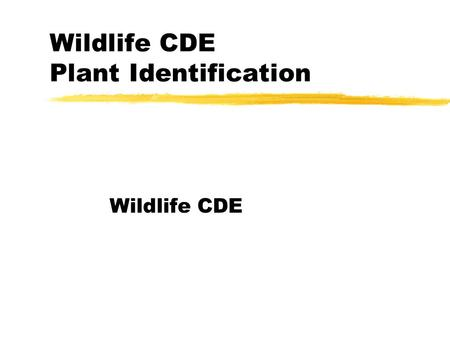 Wildlife CDE Plant Identification Wildlife CDE. Cherry zMay have black spots poisonous to most animals when it wilts – grows most everywhere.