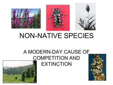 NON-NATIVE SPECIES A MODERN-DAY CAUSE OF COMPETITION AND EXTINCTION.