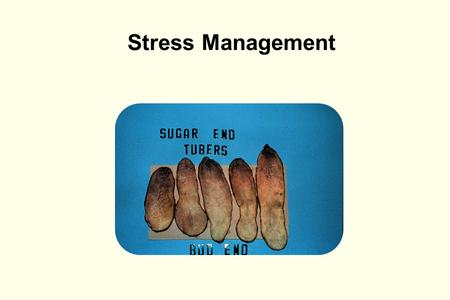 Stress Management. Outline l What is stress and how does it affect potato plants? l How does stress impact external tuber quality? l How does stress impact.