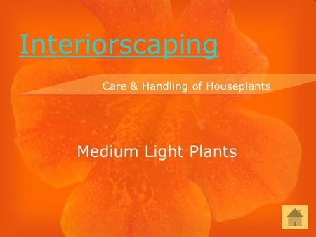Medium Light Plants Care & Handling of Houseplants Interiorscaping.