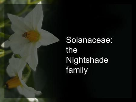 Solanaceae: the Nightshade family.