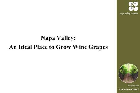 Napa Valley. To a Wine Grape, it's Eden ™ Napa Valley: An Ideal Place to Grow Wine Grapes.