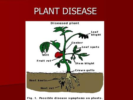 "PLANT DISEASE. ""a series of visible and invisible responses of plant cells and tissues to a pathogenic microorganism or environmental factors that result."