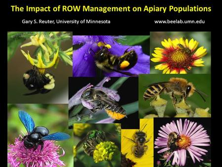 The Impact of ROW Management on Apiary Populations Gary S. Reuter, University of Minnesotawww.beelab.umn.edu.