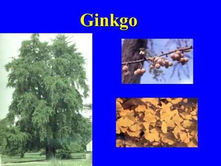 Ginkgo. Echinacea Ginseng ginsenosides Ginseng Longevity - The Chinese have long attributed this to ginseng *Memory improvement *Stress reduction.