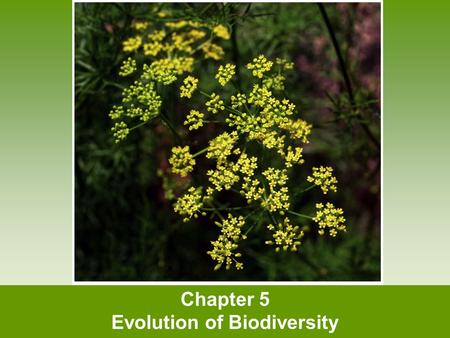 Chapter 5 Evolution of Biodiversity. Biodiversity What is biodiversity? How does evolution occur? What is an ecological niche?