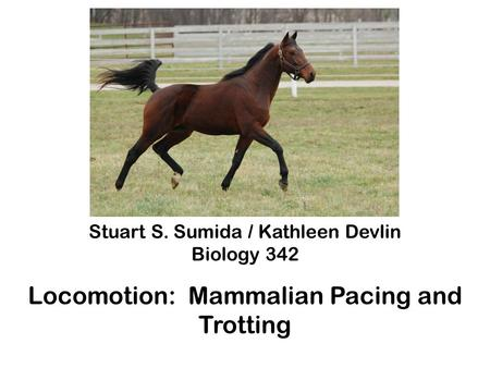 Stuart S. Sumida / Kathleen Devlin Biology 342 Locomotion: Mammalian Pacing and Trotting.