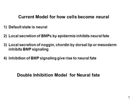 Current Model for how cells become neural 1)Default state is neural 2)Local secretion of BMPs by epidermis inhibits neural fate 3)Local secretion of noggin,