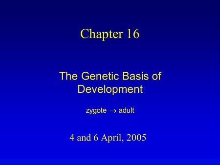 4 and 6 April, 2005 Chapter 16 The Genetic Basis of Development zygote  adult.