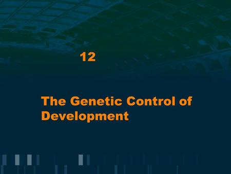 12 The Genetic Control of Development. Gene Regulation in Development Key process in development is pattern formation = emergence of spatially organized.
