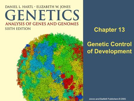 Chapter 13 Genetic Control of Development Jones and Bartlett Publishers © 2005.
