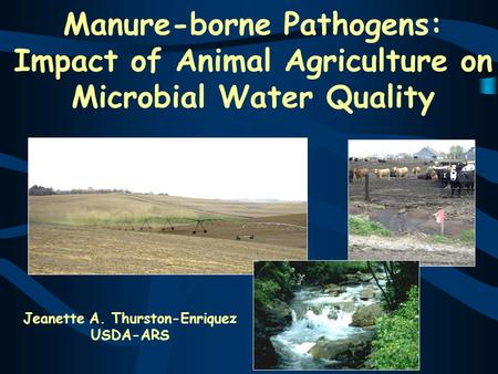 Manure-borne Pathogens: Impact of Animal Agriculture on Microbial Water Quality Jeanette A. Thurston-Enriquez USDA-ARS.